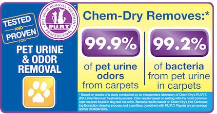 Klein Chem-Dry removes 99.9% of  pet odors from carpets